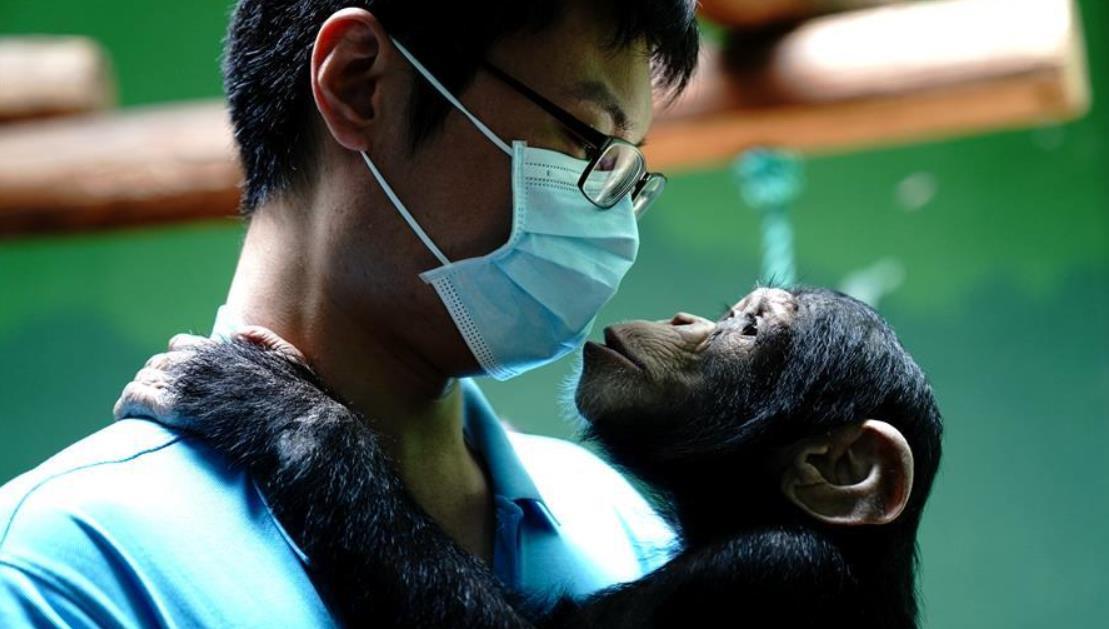 """上海动物园的""""90后""""""""奶爸"""""""