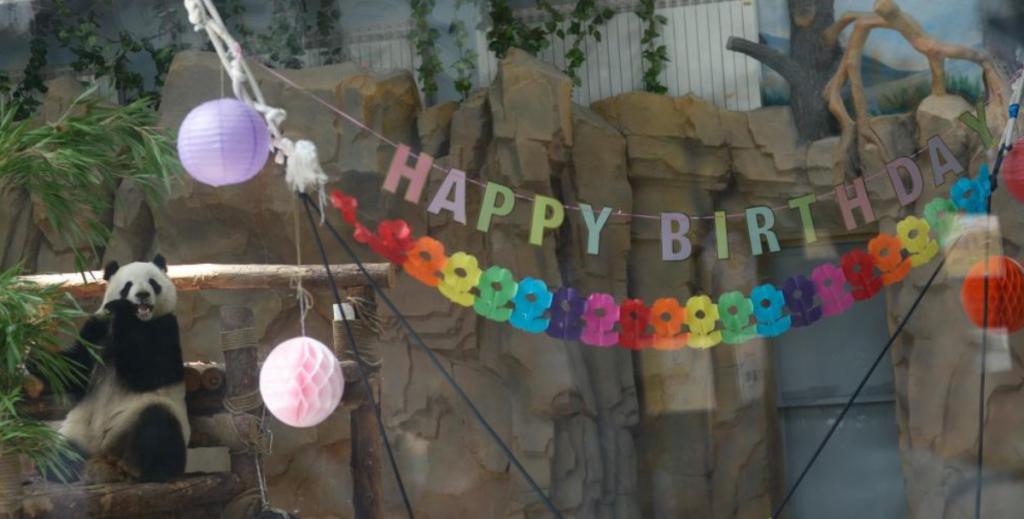 """大熊猫""""奇果""""""""园满""""迎来5周岁生日会"""