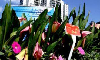 上海:盛装迎国庆